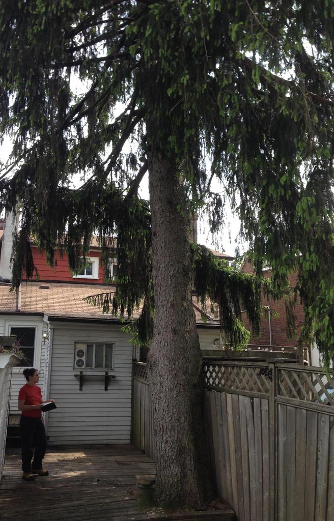 Cardinal Tree Care Arborist Reports